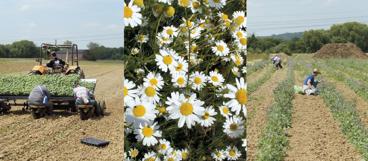 LA VIE EN HERBES : Les plantes qui rendent heureux ...
